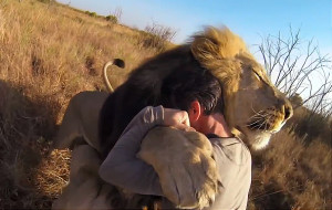 Amazing Video: Man Cuddles Lions in Africa for GoPro Adventure Series